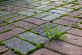 paving with grass growing through